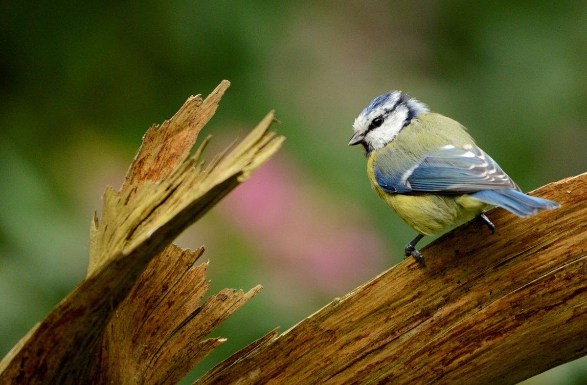 Mijn Tuin App : App tuinvogels vogelbescherming