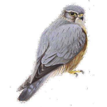 Smelleken Vogelbescherming