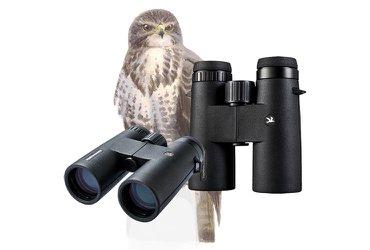 Vogelbescherming Buizerd serie