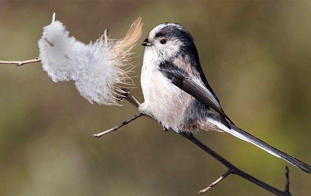 Verwonderlijk Vogelgids | Vogelbescherming YF-42