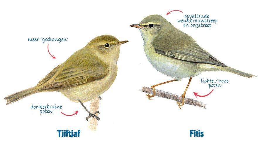 Ongebruikt Kleine bruine vogeltjes…   Vogelbescherming OE-65