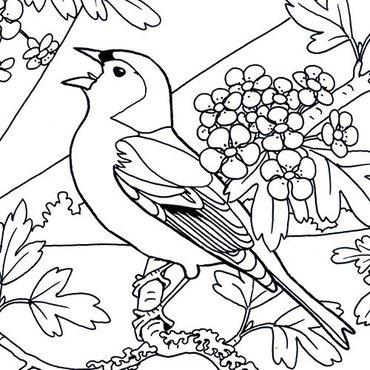 leuke kleurplaten vogels vogelbescherming nl