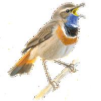 Verwonderend Vogelgids | Vogelbescherming QB-79