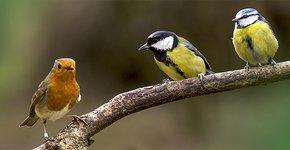 Afbeeldingsresultaat voor tuinvogels voeren