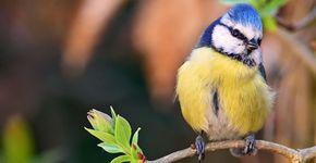 Vogels Nederland Tuin : Tuinvogels herkennen vogelbescherming