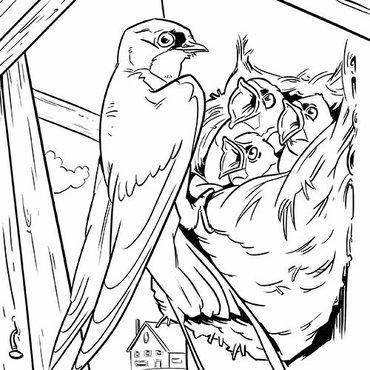 leuke kleurplaten vogels vogelbescherming