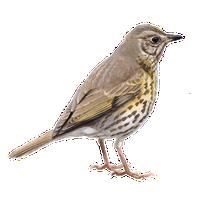 nachtegaal vogelbescherming nl