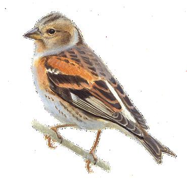 keep vogelbescherming