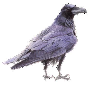 raaf vogelbescherming nl