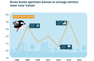 Grote bonte spechten komen in strenge winters meer naar tuinen