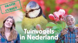 Onwijs Tuinvogels herkennen   Vogelbescherming HM-19