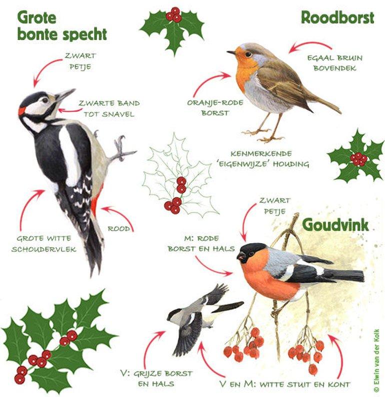 Infographic TVT kerst