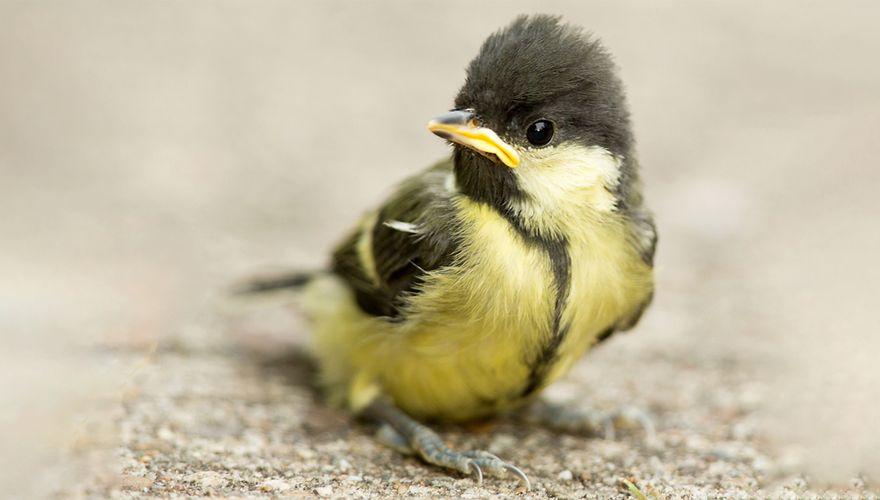 Gevonden vogeltjes | Vogelbescherming