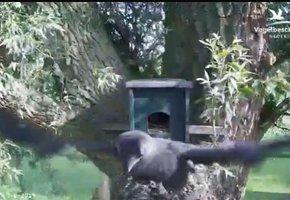 bc9a012df39 Beleef de Lente | Vogelbescherming