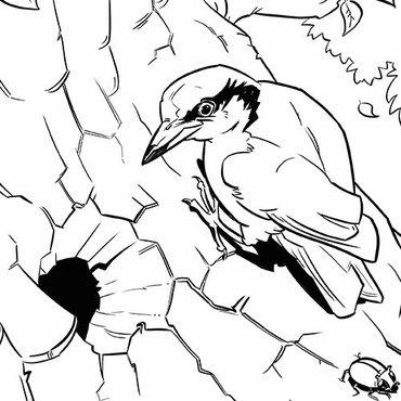 Kleurplaten Van Kleine Vogels.Download Leuke Kleurplaten Van Vogels Vogelbescherming