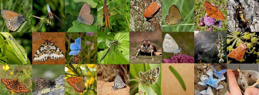 Vlinders en libellen compilatie