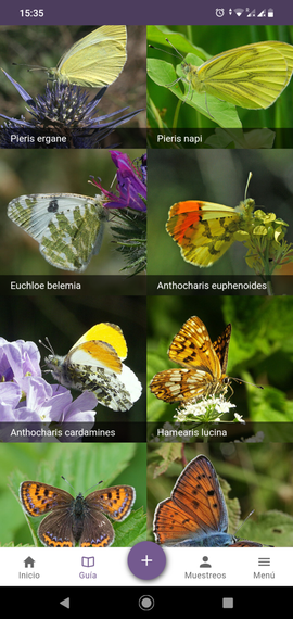 Picture Guide ButterflyCount app