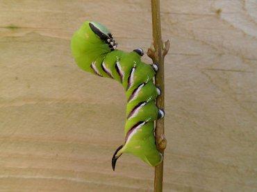 de vlinderstichting wat hebben vlinders nodig