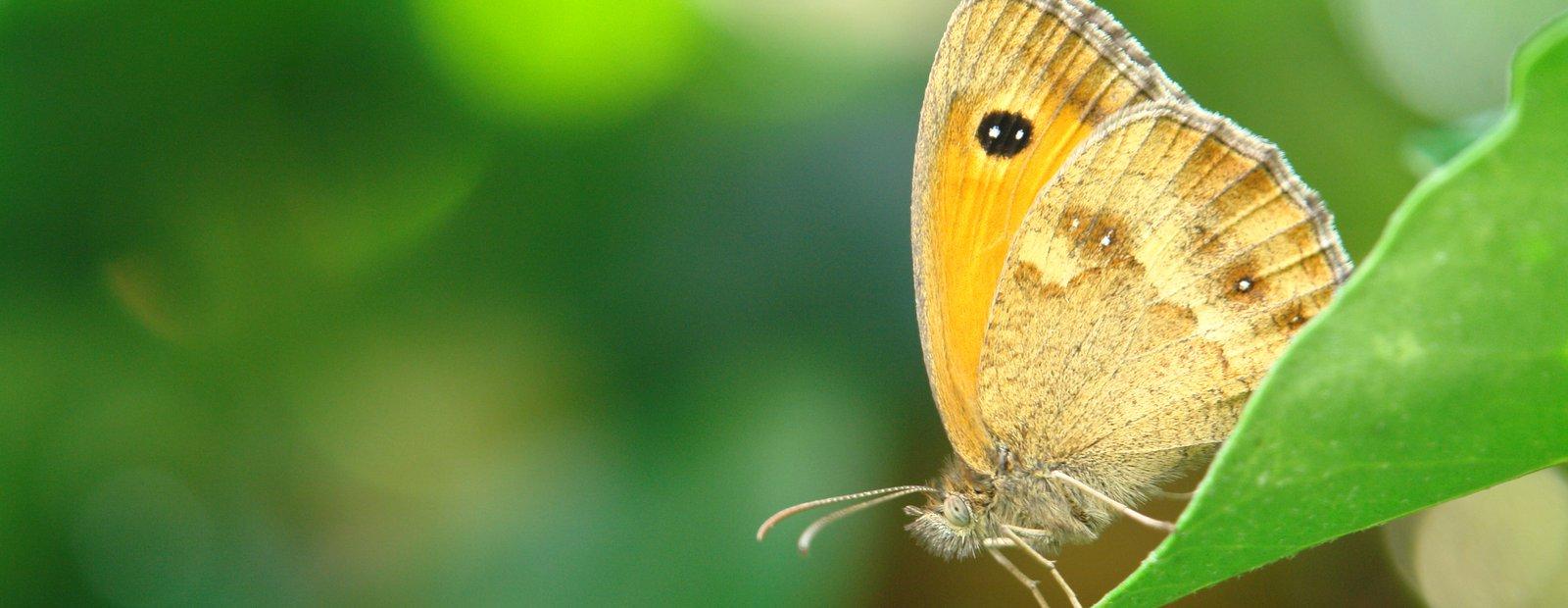 De Vlinderstichting Home